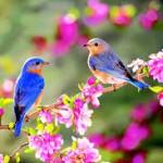 magic puzzler-spring gardening problem