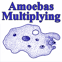 Magic Puzzle - Amoebas Multiplying