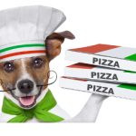 pizza-dog